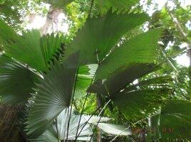 Pflanzen-Neuheiten